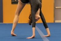 Gallery: Gymnastics Eastlake @ Woodinville